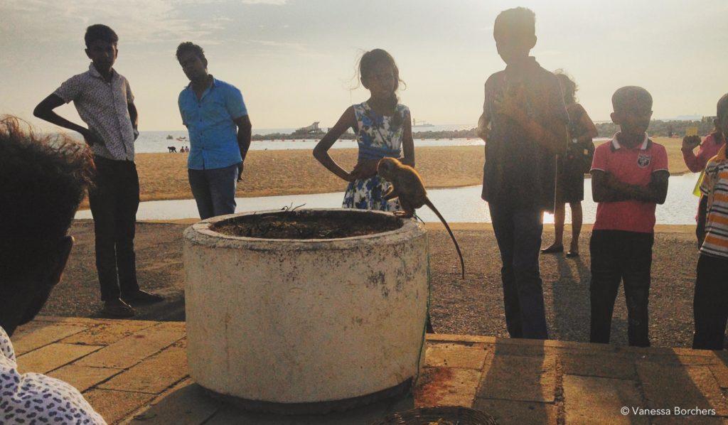 Galle Face Beach Äffchen und Kinder